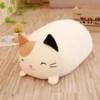 Michi / Cat